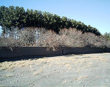 باغ شوکت آباد