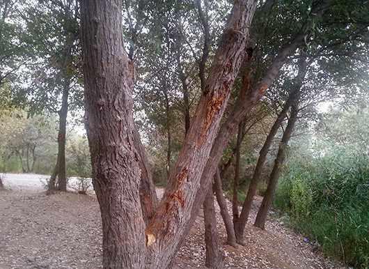 پارک جنگلی خارستان بهبهان