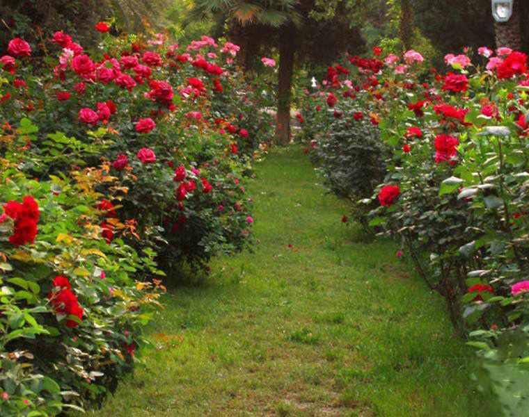 باغ گلشن بهشت بی نظیر طبس