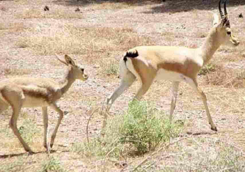 پارک ملی بجستان