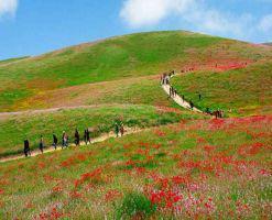 روستای چهچهه چناران مشهد