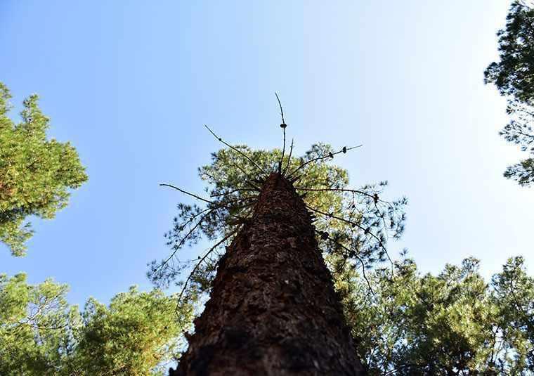 جنگل پردیسان قائم