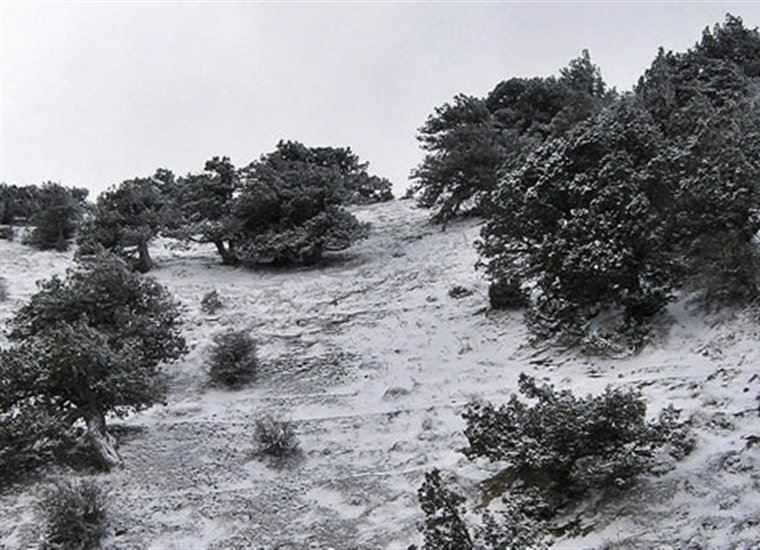 منطقه حفاظتشده قرخود