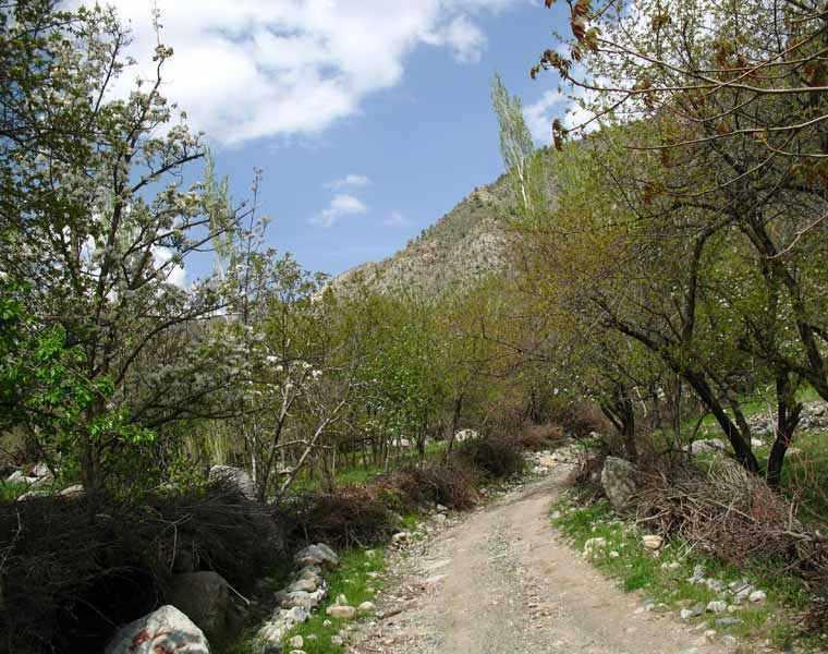 روستای مرغک