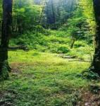 پارک جنگلی دلند