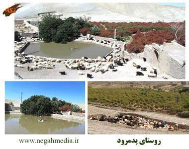 روستای پدمرود شگفتی  استان
