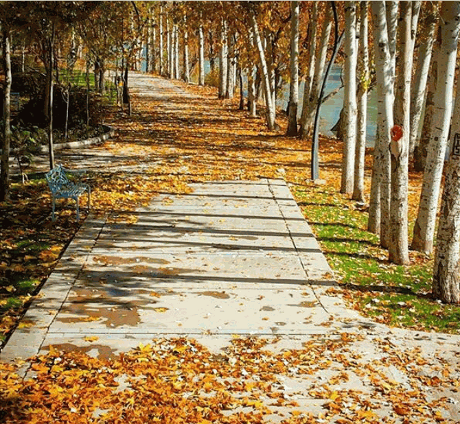 پارک ساحلی زرین شهر