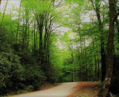 پارک جنگلی بابلکنار(بز چفت)