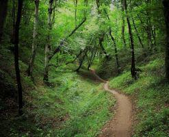 پارک جنگلی بزچفت بابل کجاست