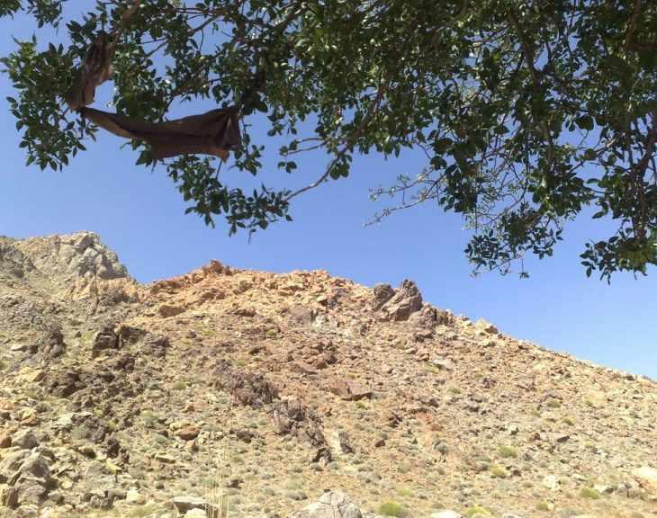 حیات وحش بیرک، زیستگاه پلنگ ایرانی