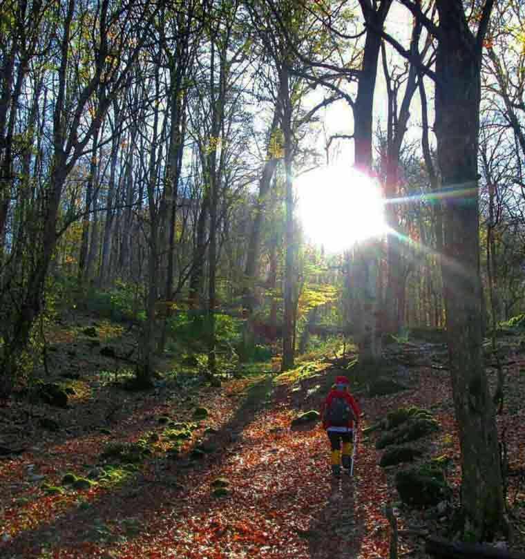 جنگل شصت کلا