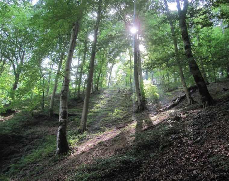 پارک جنگلی ناهار خوران، معروف ترین و زیباترین پارک گرگان
