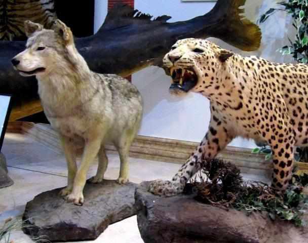 موزه تاریخ طبیعی دارآباد
