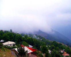 جنگل افراتخته علی آبادکتول