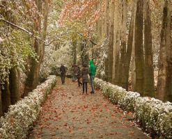 بوستان جمشیدیه، بوستان سنگی شمال تهران