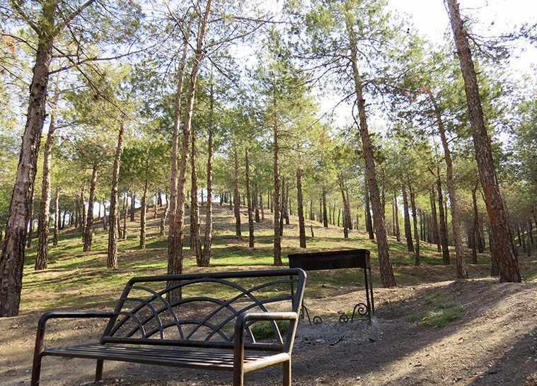 پارک جنگلی چیتگر، پارکی با امکانات متعدد