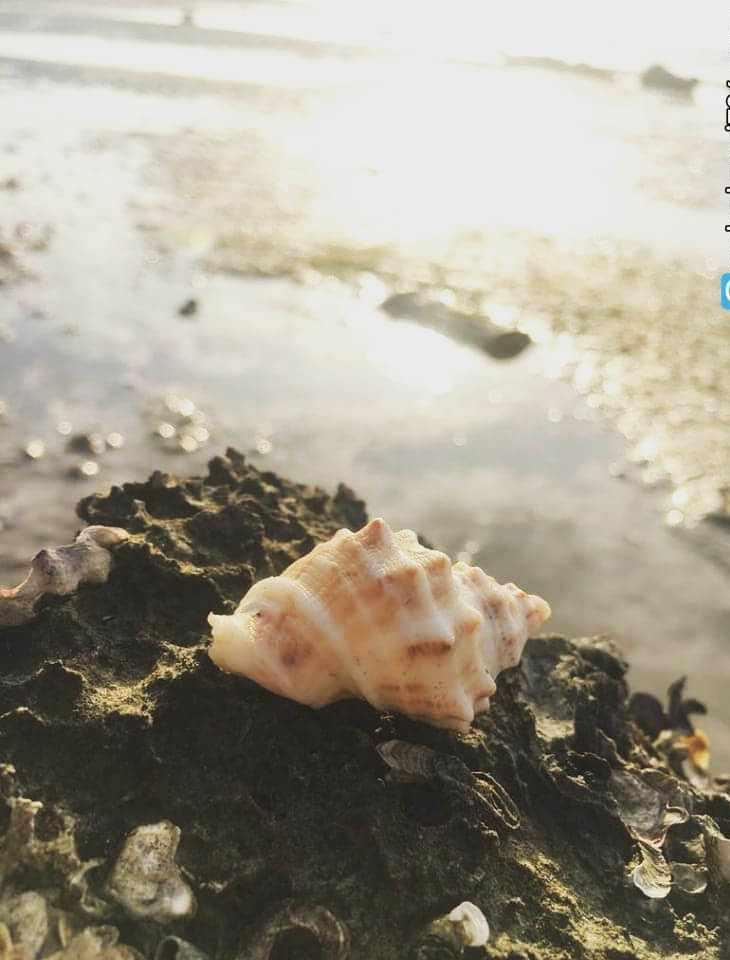 جزیره ماسه ای شیف