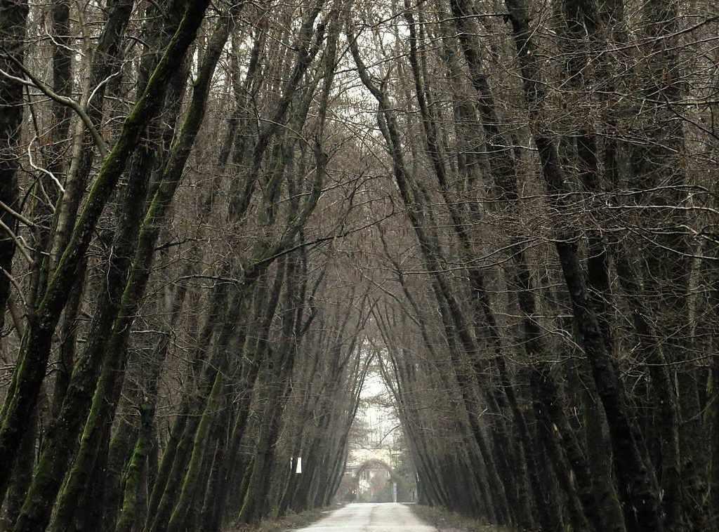 روستای صفرابسته، تونلی از جنس توسکاهایی که یکدیگر را به آغوش کشیده اند