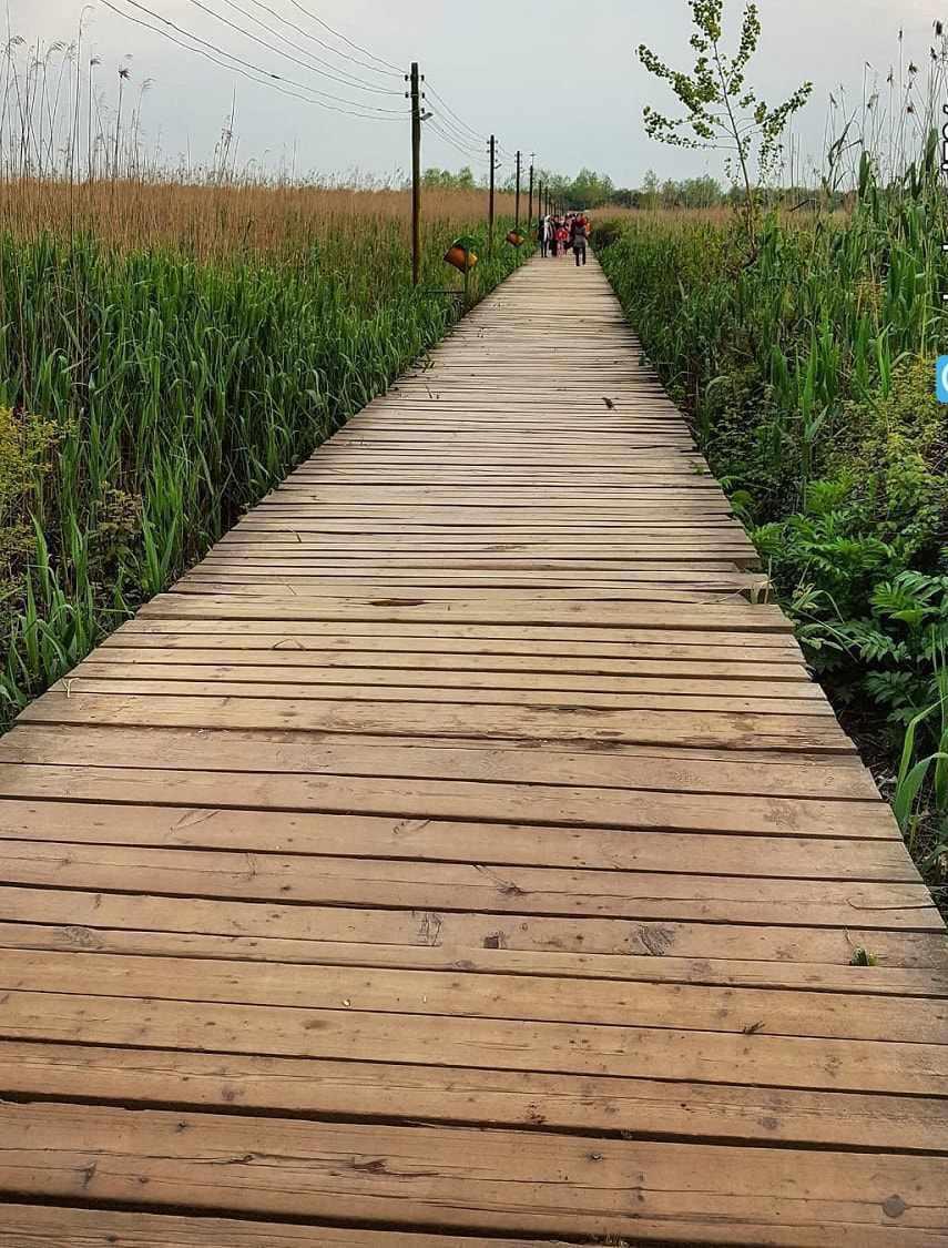 پل چوبی بندر کیاشهر