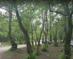 پارک جنگلی کیاشهر، پارک بی همتای خاورمیانه