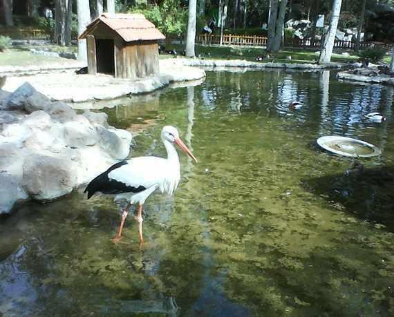 باغ پرندگان شیراز