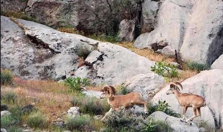 منطقه حفاظت شده بهرام گور