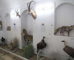 موزه حیات وحش بیرجند