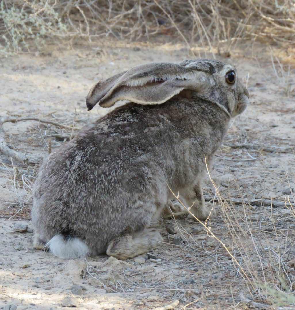 پارک ملی و پناهگاه حیات وحش بختگان