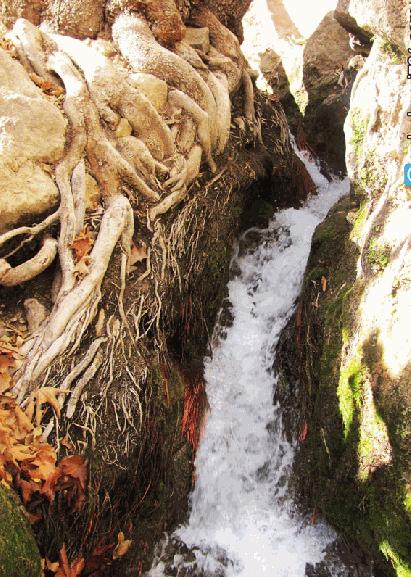چشمه قهری