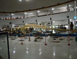 موزه تاریخ طبیعی و تکنولوژی