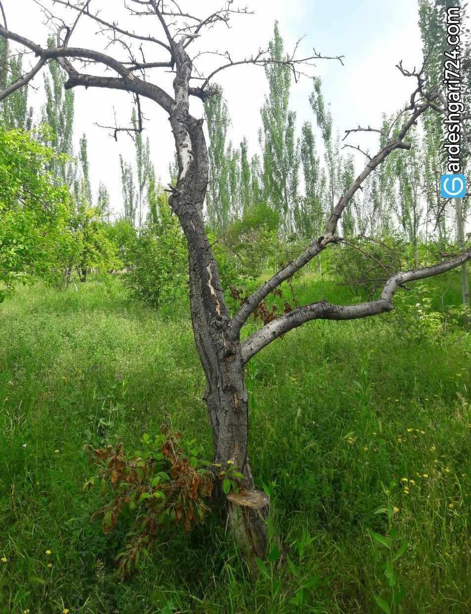 منطقه طبیعی چهاربرج