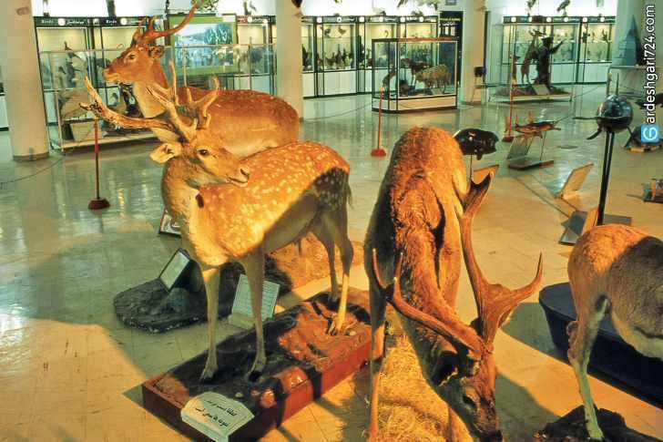 موزه تاریخ طبیعی شیراز