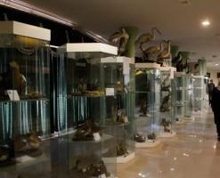 موزه تاریخ طبیعی اردبیل
