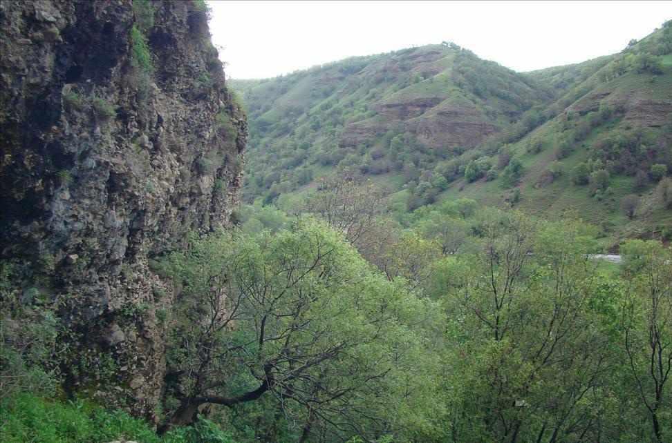 جنگل های پردانان