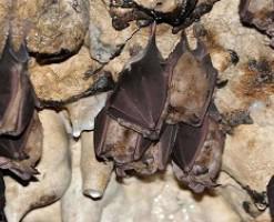 غار خفاش در کجاست؟