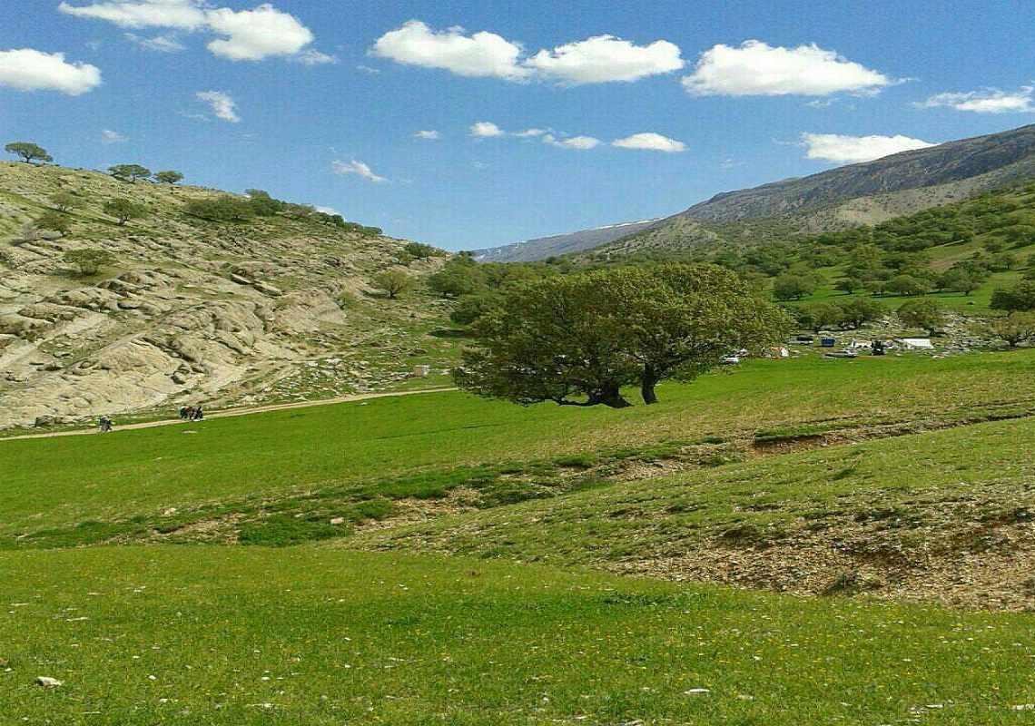 روستای کلم
