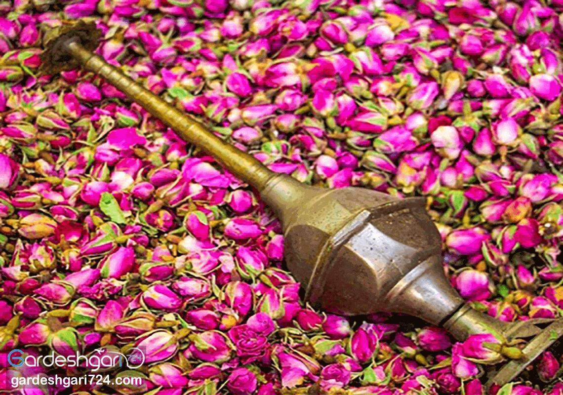 قمصر کاشان، پایتخت گلاب ایران