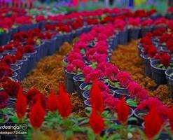 گلستان های محلات