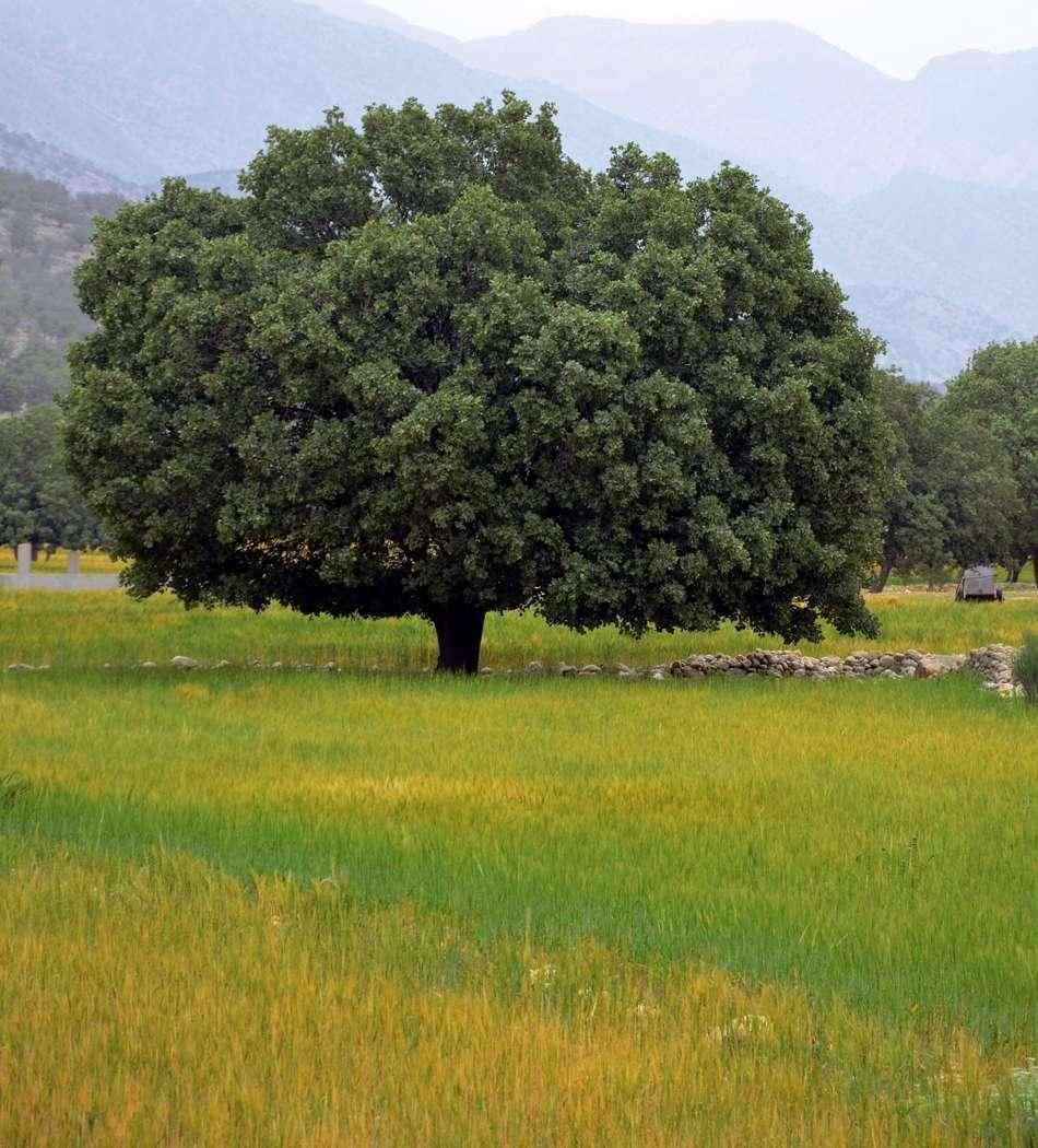 دشت ارژن شیراز
