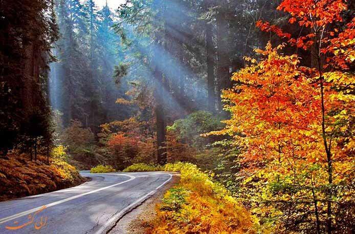 پارک جنگلی گیسوم از جاذبه های طبیعی گیلان|عکس و آدرس